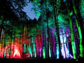 Cheap Electric Forest Tickets