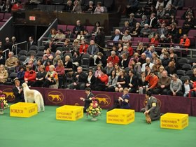 Cheap Westminster Kennel Club Dog Show Tickets